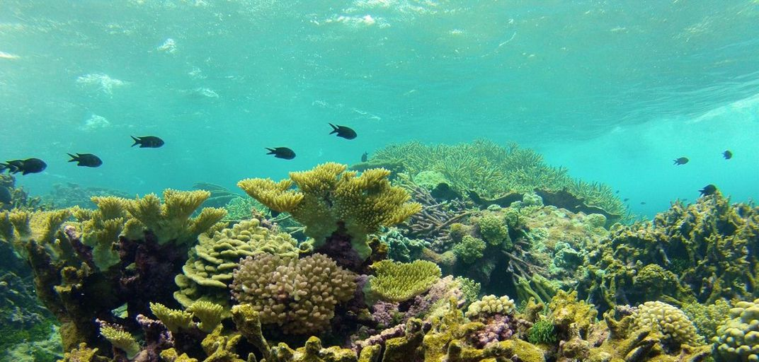 Submerged coral reef with fish swimming nearby