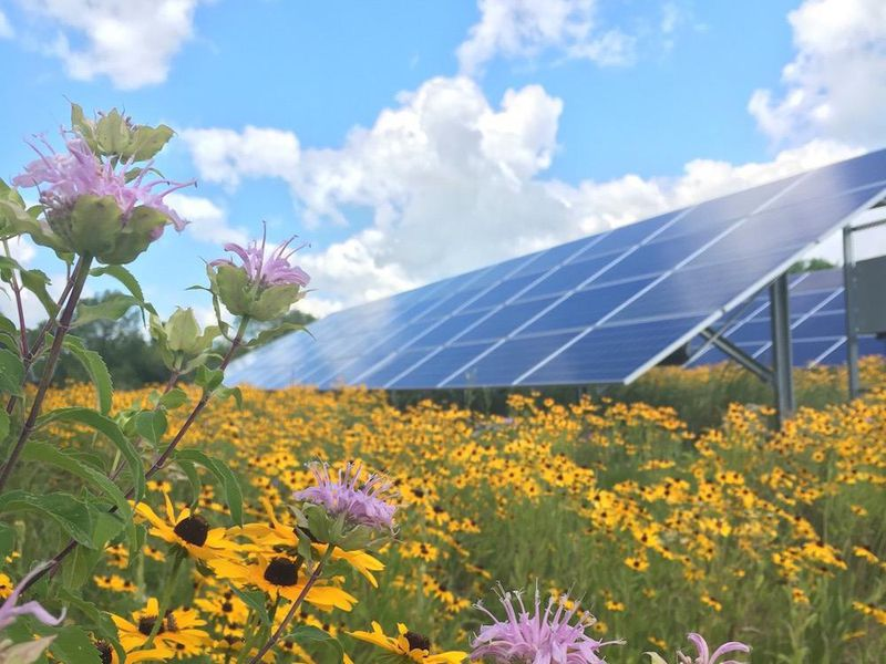 Connexus Energy's SolarWise garden in Ramsey provides habitat for pollinators.