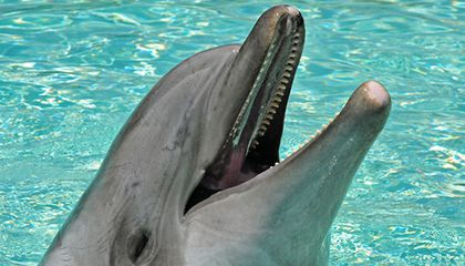 Dolphins Can Remember Their Friends After Twenty Years Apart