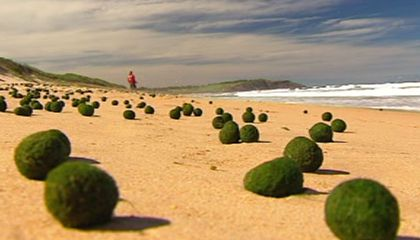 Thousands of Strange Green Balls Appeared Overnight on a Beach in Australia