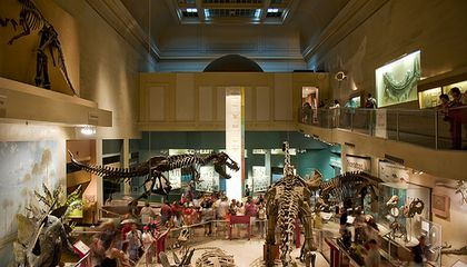 Overheard at the Natural History Museum
