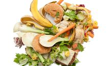 Wasting Food? It'll Cost You
