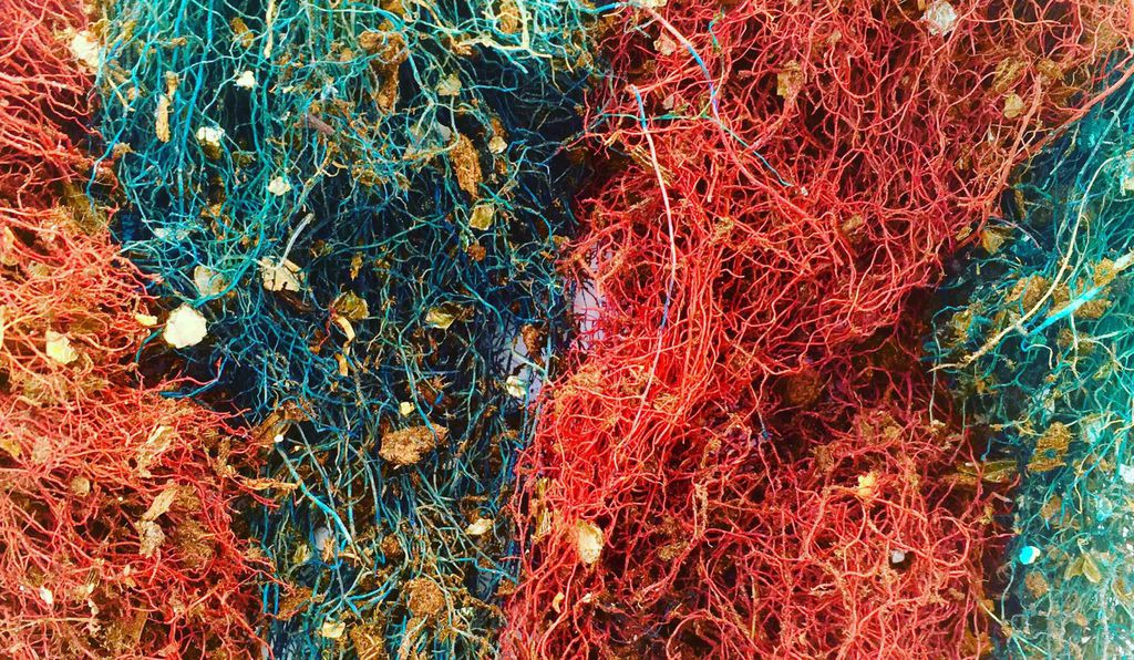 The plants all received equal sunlight, water and fertilizer, and paired plants received injections of red or blue dye so that researchers could tell their roots apart.