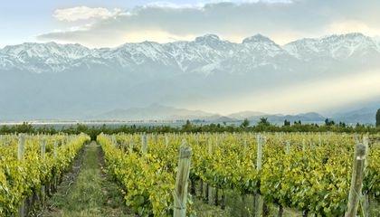 A Tour Through the Vineyards of Chile and Argentina