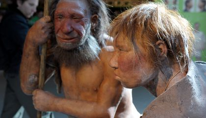 Human Diseases May Have Doomed the Neanderthals