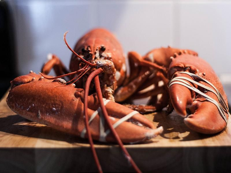 lobsters are osmoregulators Osmoregulation and osmotic balance osmoregulators and osmoconformers persons lost at sea without any fresh water to drink are at risk of severe dehydration.