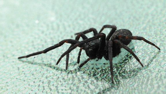 Spiders Seem To Be Getting More >> If You Must Kill That Spider The Best Way Is To Freeze It Smart