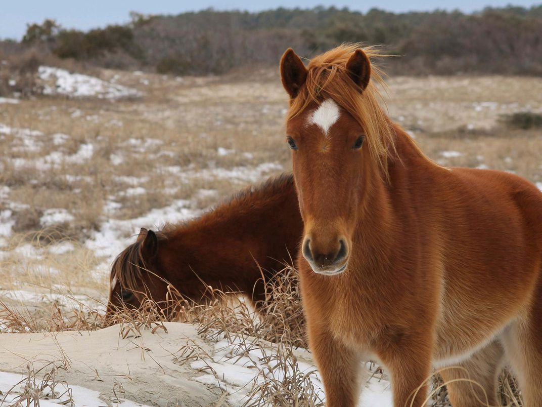 Types of wild horses in america best image konpax 2018 for Best places to travel in october in the us