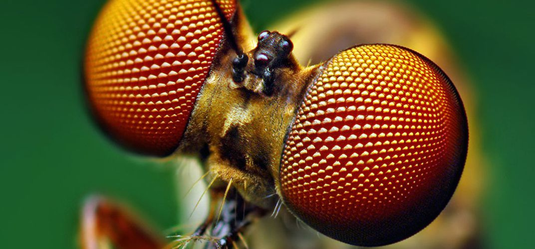 Caption: New Solar Cells Are Modeled After a Fly's Eye