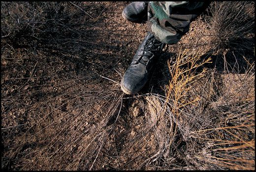 Shadow wolves travel smithsonian the smallest clues left behind by a column of backpacking drug smugglers can reveal a wealth of information flattened vegetation as well as damage to tree publicscrutiny Images