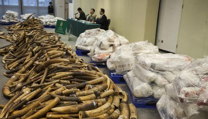 Hong Kong Will Phase Out Ivory Trade by 2021