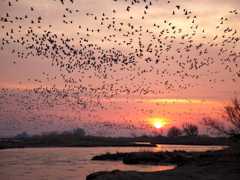 The Best Places In The U S To See Spring 39 S Migrating