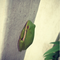 Green Frog on Porch.