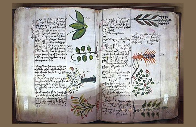 botanical-encyclopedia-2.jpg