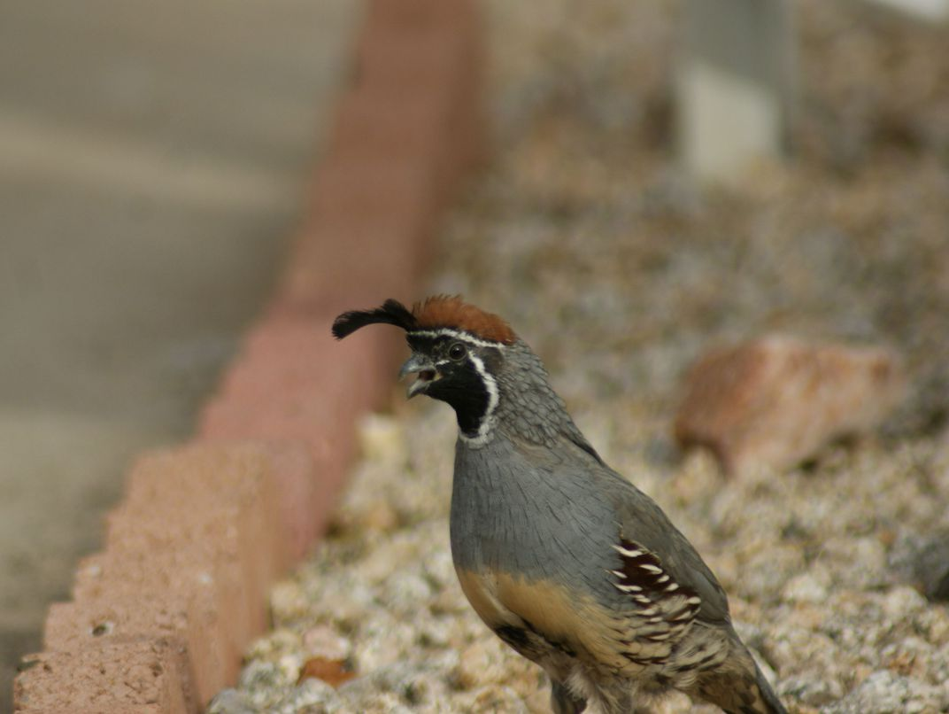 photo contest slideshow