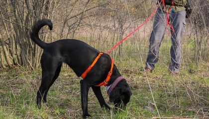 Meet Ernie and Betty White: Two Conservation Dogs Sniffing Out Invasive Species in Wisconsin