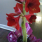 Red Amaryllis with 3 stalks