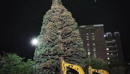 Watch a 100-foot-tall Giant Sequoia Get Transplanted in Boise