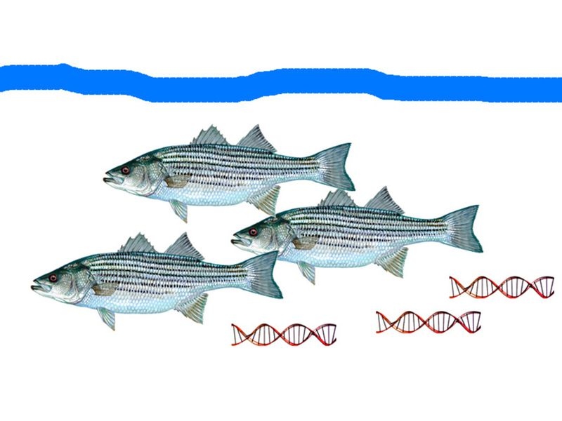 Fish leave bits of DNA behind that researchers can collect.