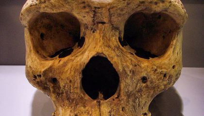 Four Species of Homo You've Never Heard Of, Part II