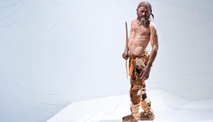 Ötzi the Iceman's Last Meal Included Goat Bacon