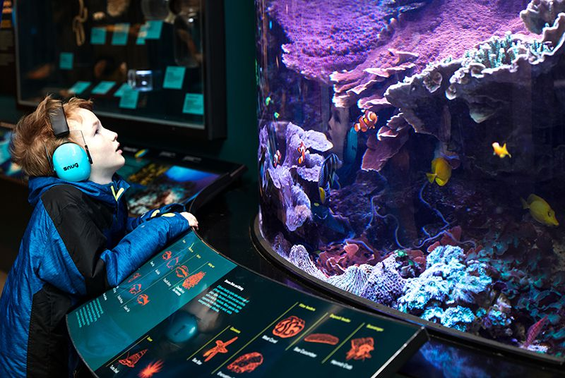 How Museums Are Becoming More Sensory Friendly For Those