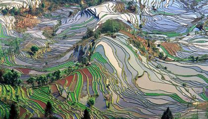 Domestic Rice Was Grown in China 9,400 Years Ago