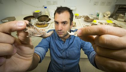 Fossils Show Ancient Rats Were the Size of a Small Dog