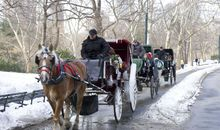 horse drawn carriages in NYC