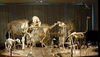 The Hidden Biases That Shape Natural History Museums