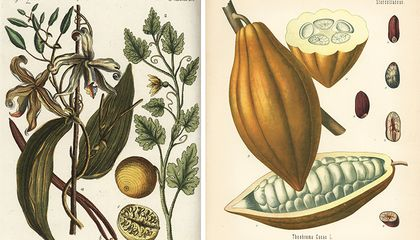 The Delicious, Ancient History of Chocolate and Vanilla