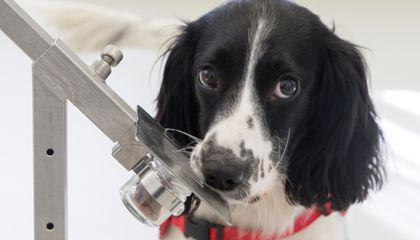 Good Dogs Could Help Identify Malaria Carriers