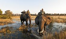 Abu Camp elephants
