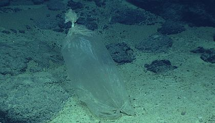 Even the Deepest Parts of the Ocean Are Polluted With Startling Amounts of Plastic