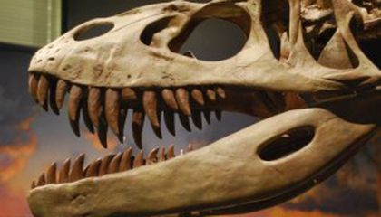 What Dinosaurs Would You Like to See in Jurassic Park 4?