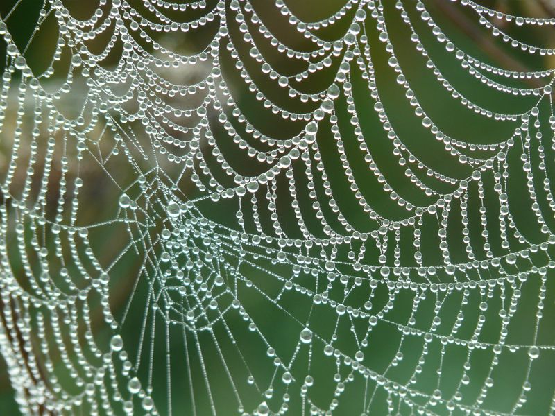New Artificial Spider Silk: Stronger Than Steel and 98