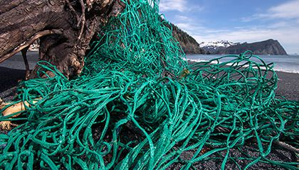 Artists Join Scientists on an Expedition to Collect Marine Debris