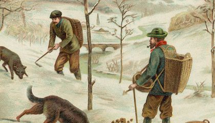 Truffle hunting illustration
