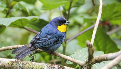 Is the Endangered Species List Missing Hundreds of Species of Birds?