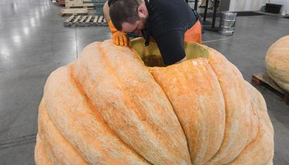 How Elysian Brewing Company Turns a 1,790-Pound Pumpkin Into a Keg