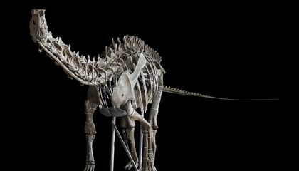Image: Meet the stars of Smithsonian's new Fossil Hall