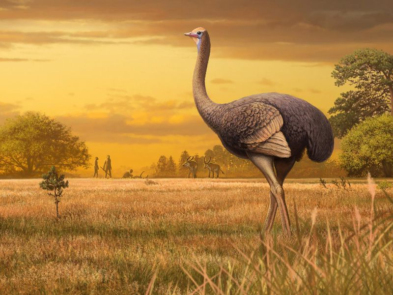 Fossil of Ancient Bird Three Times Bigger Than an Ostrich Found in Europe