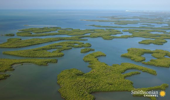 Preview thumbnail for video'How a Giant Lazy River of Grass Became the Everglades