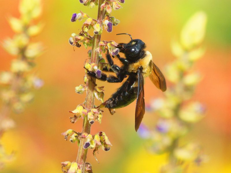 why bee population is declining
