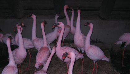 Flamingos Duck for Cover in the Hirshhorn's New Black Box Installation