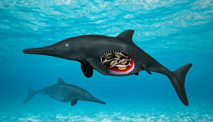 Fossilized 'Sea Monster' Found Pregnant With Eight Babies