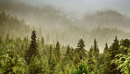 Tongass National Forest Loses Restrictions on Logging and Road Development