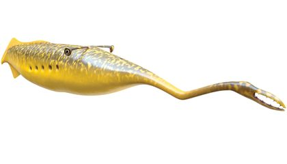 """Image: Scientists learn more about the """"Tully monster"""""""