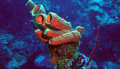 Your Oldest Ancestor Was Probably Sponge Like