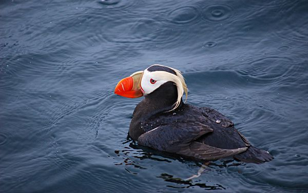 Where have all the seabirds gone?